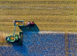 The Structure of a Crop Insurance Policy
